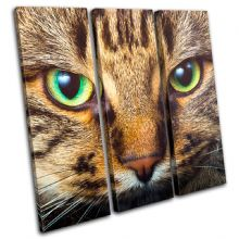 Cat Face Animals - 13-1316(00B)-TR11-LO